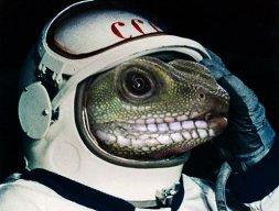 SpaceGecko
