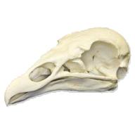 Vulture051